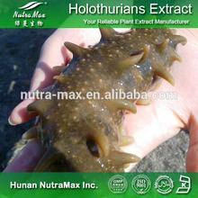 Sea Cucumber Extract , Sea Cucumber Extract Powder , Sea Cucumber P.E.