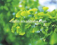 High quality ginkgo biloba extract/bulk ginkgo biloba extract/ginkgo biloba leaf