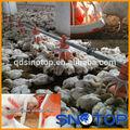automática de pollos de engorde d