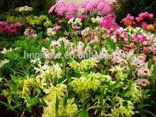 taintless new vegetable organic fertilizer high quality garden organic fertilizer
