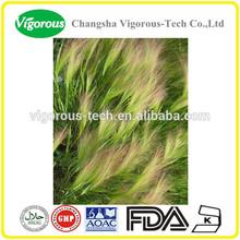 Factory provide high quality Barley Grass Juice Powder/Hordeum vulgare/Vitamins & protein