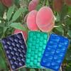 PP Fruit tray design tray