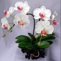 2014 SJ AF039 Venta caliente orquídea blanca artificial para decoración interior seda orquídeas flor para boda fiesta regalo festival flor