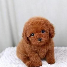 popular and lovely cartoon animal plush dog teddies for sale