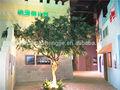 Alta calidad de la langosta del árbol / de acacia para la decoración del hotel