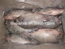 Best frozen tilapia vietnam importing