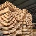 Resinosas e madeira de pinho, spruce madeira serrada madeira serrada