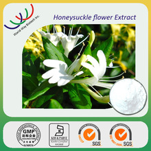 Chinese herb medicine high quality honeysuckle flowers extract powder