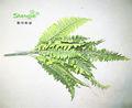 القماش/ النسيج/ الزمرد السراخس أوراق النبات الاصطناعي