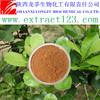 Manufacturer sales yerba mate powder