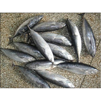 Low frozen tuna fish price offer from China