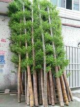 2014 caliente de la venta de decoración de bambú artificiales, seco de la decoración al aire libre de mimbre de bambú artificiales, falsos de bambú para la decoración del paisaje