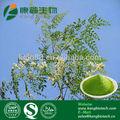 natural suplemento de hierbas extracto de moringa en polvo