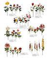Atacado baratos decorativo preço de fábrica científica nomes de flor