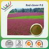 China manufacturer free sample supply best quality 8% biochanins red clover extract powder trifolium pratense l