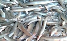 sand lance fish
