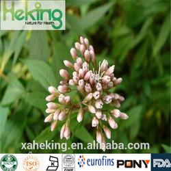 2014 100% Natural High Quality Herba Eupatorii Extract 4:1,10:1,20:1,etc.