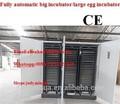 Fértiles de pollo huevosparaincubar/incubadora de huevos grandes/incubación/incubadora para huevos 14784