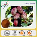 las semillas de cacao en polvo extracto de grano de cacao en polvo