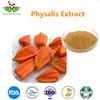 New Arrival Calyx seu Fructus Physalis Extract / Winter Cherry Extract 10:1