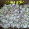 new season fresh white garlic price in china