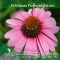 100% puro extrato de echinacea purpurea compostos fenólicos em 3w fábrica