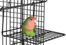 Bird Play Pen
