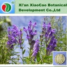 GMP Supply Baikal Skullcap Extract 90% Baicalin,Radix Scutellariae Extract Baicalin 98%