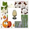 pure natural garlic extract allicin powder/liquid allicin/1% allicin
