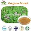 Vegetali naturali exract origano estratto di erbe in polvere 10:1