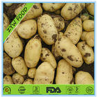 Fresh Holland potatoes #7,#15 High-quality Competitive price Large planting bases