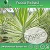 Natural Yucca Extract Powder