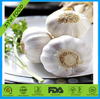 New Crop Chinese Wholesale Fresh White Natural Dried Garlic Low Price Exporter in China