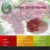 GMP P.E Company Sale Grape Seed Extract