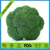 2014 Chinese Hot Sale Fresh Green Broccoli