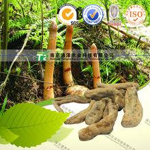 100% pure herb medicine gastrodin