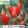 100% solubile in acqua naturale estratto in polvere wolfberry