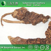 100% Natural Radix Sophorae Flavescentis Extract Made in China