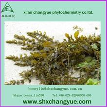 Natural bladderwrack seaweed kelp extract