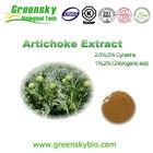 artichoke extract / artichoke / canned artichoke