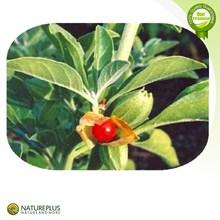 Professional Supply 10:1, 20:1 Ashwagandha Extract