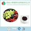 FDA manufacturer supply Procyanidin 95% Organic grape seed extract