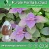 100% Natural Perilla Seed P.E./Perilla Seed Powder/Perilla Seed Extract
