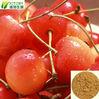 GMP Factory supply acerola cherry extract powder 17% -25%Vitamin C