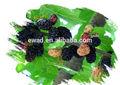 Alta qualidade mulberry antocianidinas 10% produção de vinho de amora