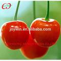 2014 nova colheita de cereja em conserva de frutas frescas em calda fabricante