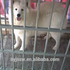 Pet Dog Cages Dog Kennel