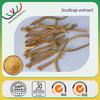 GMP factory supply high quality natural 95% baicalin radix scutellariae p.e.