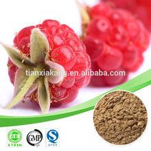 raspberry extract /raspberry extract raspberry ketone / black raspberry extract powder