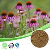 chicoric acid /chicoric acid powder / echinacea purpurea extract in bulk